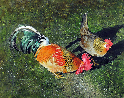 graham clark cock and hen