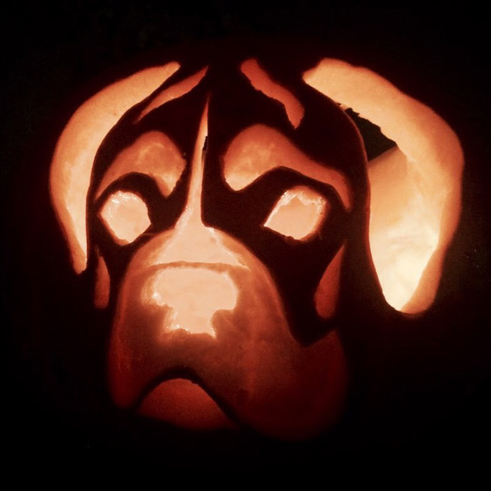 Perfect Pumpkin Carving - Roxy The Boxer - Volta Creative